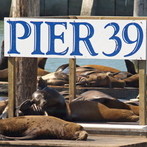 pier39-seals.jpg