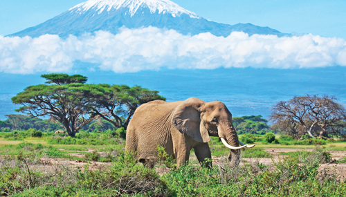 Africa Vacation Packages